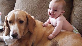 Очаровательные сценки: Кошки и собаки любят детишек