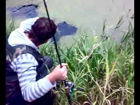 Щука на болоте