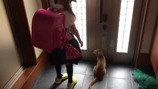 外に出たい猫を巧妙にかわす息子がおもしろい
