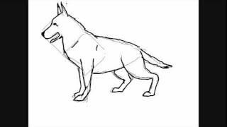 dessin de chien berger allemand comment dessiner