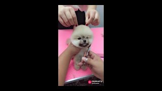Musical.ly best funny | Pets videos | dubsmash clips | dogs and cats compilation