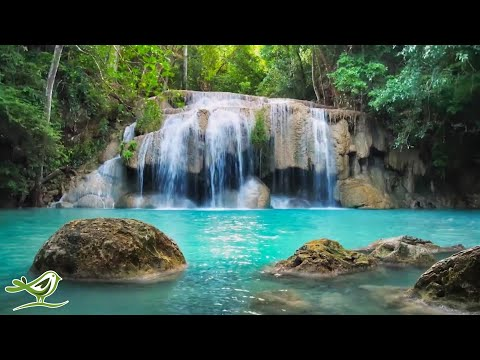 Beautiful Piano Music 24/7: Study Music, Relaxing Music, Sleep Music, Meditation Music