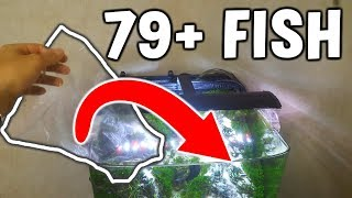 Adding EVEN MORE 79+ Fish In Sand Waterfall Tank!