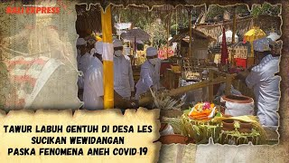 Tawur Labuh Gentuh di Desa Les, Sucikan Wewidangan Paska Fenomena Aneh Covid-19