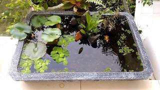 Hướng dẫn thiết kế hồ cá 7 màu 200k cực re, đẹp, bền qua năm tháng và đặt biệt là rẻ