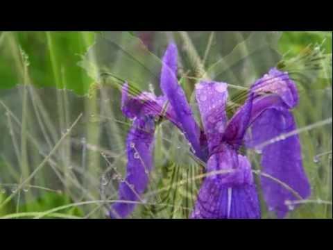 《蘭花花3首》陸春龄笛子獨奏 贠恩鳯、郭蘭英女声獨唱
