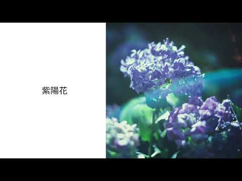 postman - 紫陽花 / hydrangea(Official Audio)