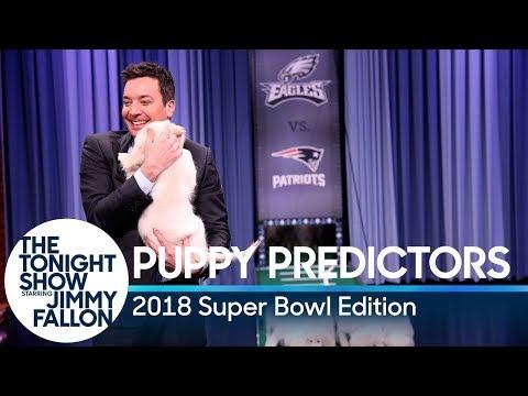 Puppies Predict the Winner of Super Bowl LII