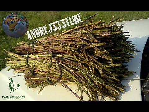 Le arachidi coltivazione ed utilizzi for Semina arachidi