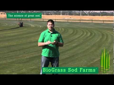 BioBlue