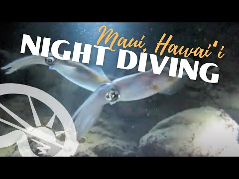 """Black Rock"" Night Diving in Ka'anapali Maui, with Extended Horizons Scuba"