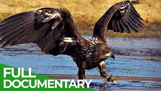 Wild Germany: The Mecklenburg Lake Plateau | Free Documentary Nature