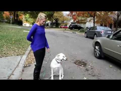 Dog Reactivity with Lilly