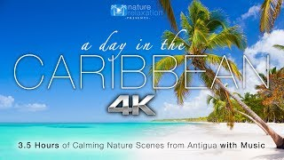 """""""A Day in the Caribbean"""" 4K 3.5 HR Nature Relaxation™ Ambient Film + Calming Music"""