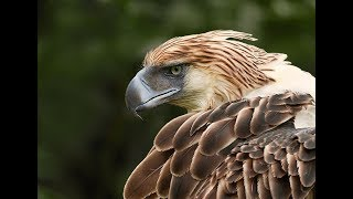 The World's Largest Eagle