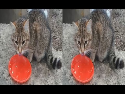 Hungry Fluffy Lumps in 3D !Feeding stray cats ( PART 2 ).3D VIDEO