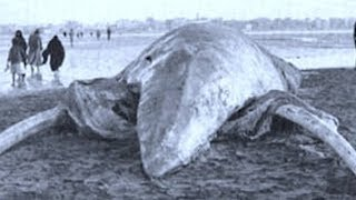 5 Most Mysterious Creatures Caught In Egypt!