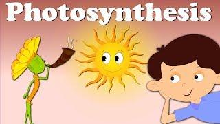 Photosynthesis | #aumsum #kids #science #education #children