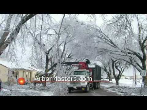 Arbor Masters - Specialists in Storm Response for Trees