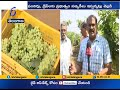 Farmers in Telangana are Leaning Towards Grape Cultivation