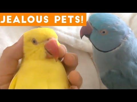 Funniest Jealous Pets Ever Compilation 2018 | Funny Pet Videos