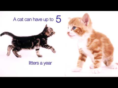 The truth about neutering - as told by kittens.