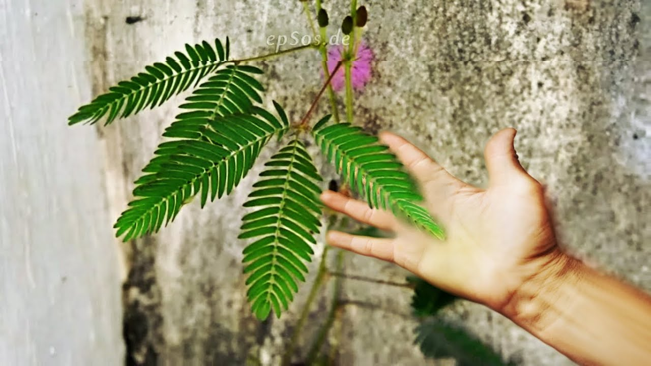 Fast Plant Can Move - YouTube