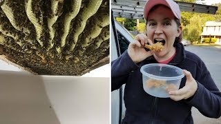 Watch Woman Discover 120,000 Bees Crawling Inside Her Ceiling