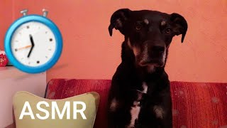 ASMR/Sound for relaxing my dog Leo🐶