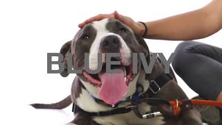 Adopt Blue Ivy at NKLA