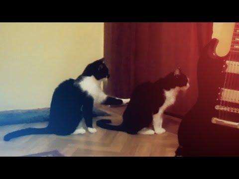 Мачорот се обидува да се извини затоа што ја повредил својата сакана