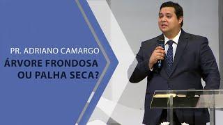 16/02/20 - Árvore frondosa ou palha seca? - Pr. Adriano Camargo