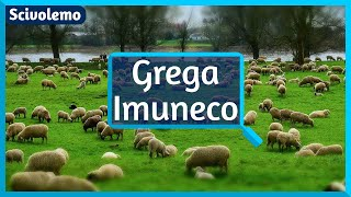 Video yQaBs77Uk0A: [1094] Kio estas grega imuneco?