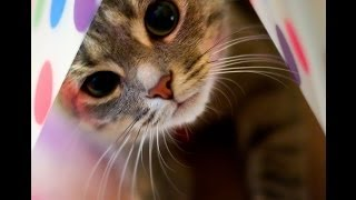Funny Cat Videos Ever - Funny Animals Funny Fails 2014