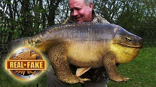 AMAZING MUTANT FISH FOUND - real or fake?
