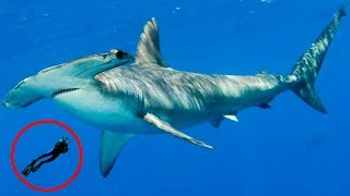 Most FASCINATING Shark Behavior!