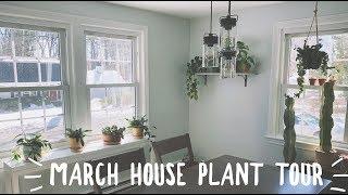 march houseplant tour! | easy care plants!