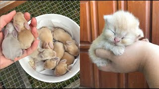 Cutest baby animals Videos Compilation Cute moment of the Animals - Cutest Animals #1