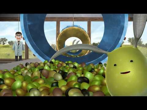 MO' clip 4: la selezione delle olive