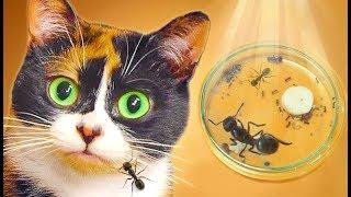 Das neue Haus für die Ameisen
