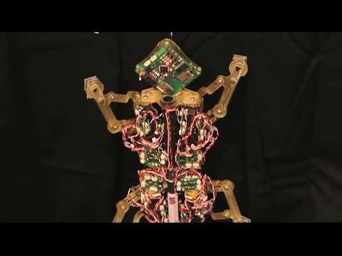 Мало ама ѕверско роботче, може да носи товар 100 пати потежок од него