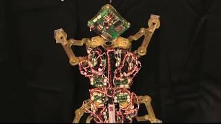 ايسو فيديو | esso Videoاصغر روبوت يستطيع حمل اضعاف وزنه