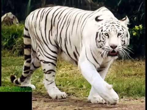 animales terrestres - photo #2