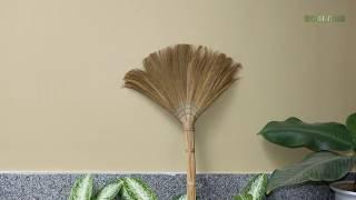 Ý nghĩa phong thủy cây chổi và cây lau nhà