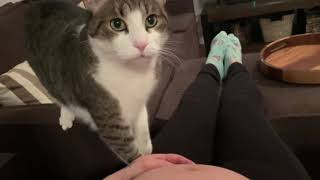 Sweet cat just realized it's owner is pregnant.
