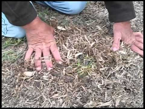How To Repair Dead Patches In Your Lawn Youtube
