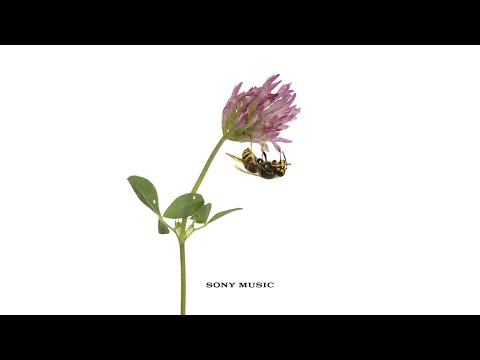 Vampire Weekend - Harmony Hall (Official Audio)