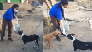 Watch: Anchor Rashmi feeding street dogs..