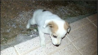 A desperate puppy found while I was feeding cats