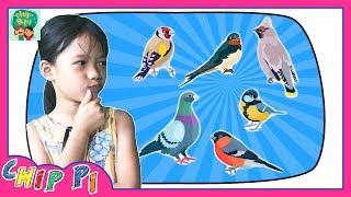 Birds Names for Kids in English with Pictures
